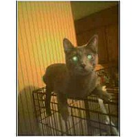 Adopt A Pet :: Blue Boy (mixed breed) - Owasso, OK
