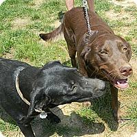 Adopt A Pet :: Cinnamon and Raisin - Brattleboro, VT