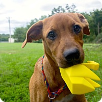 Adopt A Pet :: *Happy - PENDING - Westport, CT