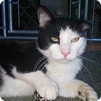Adopt A Pet :: Hobbs - Modesto, CA