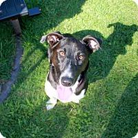 Adopt A Pet :: Pepper - Marietta, GA