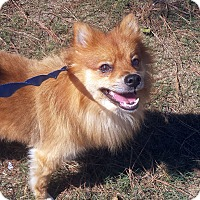Adopt A Pet :: Simba - Alpharetta, GA