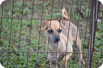 Dachshund Mix Dog for adoption in Pikeville, Maryland - Paris