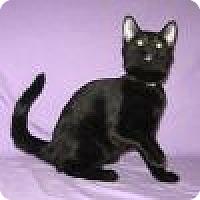 Adopt A Pet :: Toni - Powell, OH