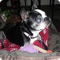 Adopt A Pet :: Hattie Mae - Jackson, TN