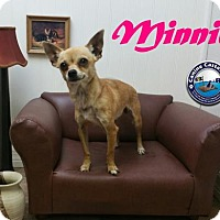 Adopt A Pet :: Minnie - Arcadia, FL