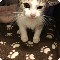 Adopt A Pet :: Fonzie - Sheboygan, WI