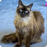Adopt A Pet :: Carmelita - Oakland, CA