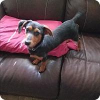 Adopt A Pet :: Peoria - conroe, TX