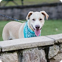 Adopt A Pet :: Sky - Fayetteville, AR