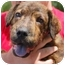 Photo 1 - Shar Pei Mix Puppy for adoption in Inman, South Carolina - Jagermeister
