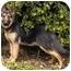 Photo 4 - German Shepherd Dog Dog for adoption in Los Angeles, California - Meadow von Meisenstadt