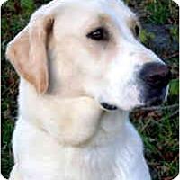 Adopt A Pet :: LILLI - Wakefield, RI