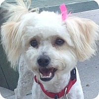 Adopt A Pet :: Mattie - La Costa, CA