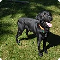 Adopt A Pet :: Bud - Lewisville, IN