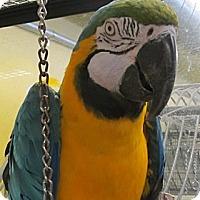 Adopt A Pet :: Makia - Edgerton, WI