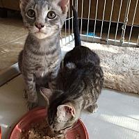Adopt A Pet :: Riley - Monrovia, CA