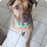 Adopt A Pet :: Brodie - Minneola, FL