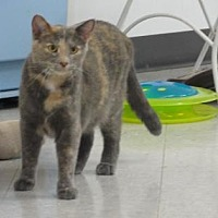 Adopt A Pet :: Cookie - Freeport, IL