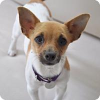 Adopt A Pet :: JillyBean - Harrison, NY