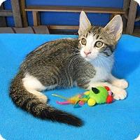 Adopt A Pet :: Jeremy - Glendale, AZ
