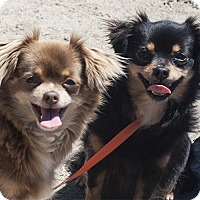 Adopt A Pet :: Marge & Maggie - Burlingame, CA