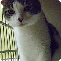 Adopt A Pet :: Bub - Hamburg, NY