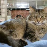Adopt A Pet :: Trapper - Westville, IN