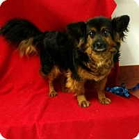 Adopt A Pet :: Prince($225) - Redding, CA