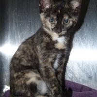 Adopt A Pet :: Marble - Meadow Lake, SK