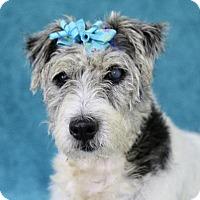 Adopt A Pet :: Phoenix - Picayune, MS