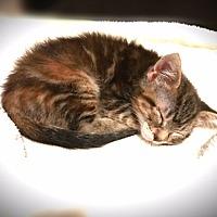 Adopt A Pet :: Ameila - Hinton, OK