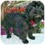 Photo 2 - Shih Tzu/Pekingese Mix Puppy for adoption in Los Angeles, California - ERICA