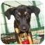 Photo 2 - Border Collie/Beagle Mix Puppy for adoption in Richmond, Virginia - PIP