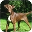 Photo 3 - Doberman Pinscher/Labrador Retriever Mix Dog for adoption in Jacksonville, Florida - Dobie Brown