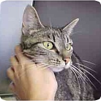 Adopt A Pet :: Izzy - Lunenburg, MA
