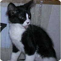 Adopt A Pet :: Tearsa - Modesto, CA