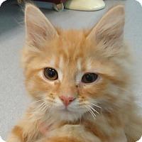 Adopt A Pet :: McJingles - Columbus, OH
