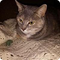 Adopt A Pet :: Tweesie - Sacramento, CA