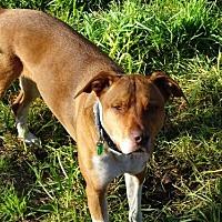 Adopt A Pet :: Carlie - Petaluma, CA