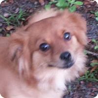 Adopt A Pet :: ShyAnn - ADOPTED! - Terra Ceia, FL