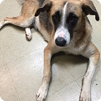 Adopt A Pet :: GeeGee - Fair Oaks Ranch, TX