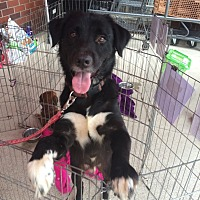 Border Collie Mix Dog for adoption in Acworth, Georgia - Panda