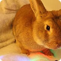 Adopt A Pet :: Morrison - Hillside, NJ