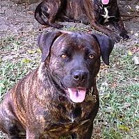 Adopt A Pet :: Chelsea - Miami, FL