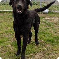 Adopt A Pet :: Zoebelle - Terrell, TX