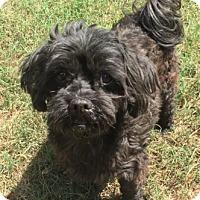 Adopt A Pet :: Bama - Toronto, ON