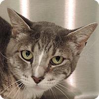 Adopt A Pet :: MASSIE - Sioux City, IA