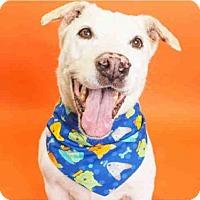 German Shepherd Dog Mix Dog for adoption in Phoenix, Arizona - HOUDINI
