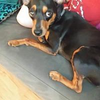 Adopt A Pet :: Titan (Courtesy Post) - Malaga, NJ